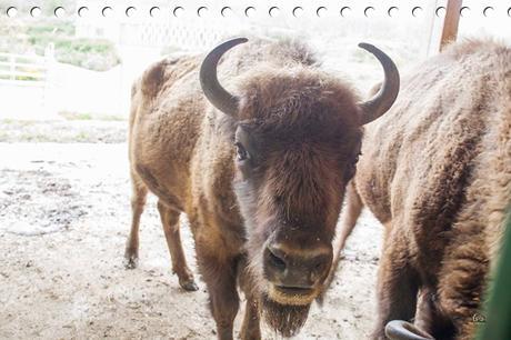 Centro de Interpretación del Bisonte Europeo