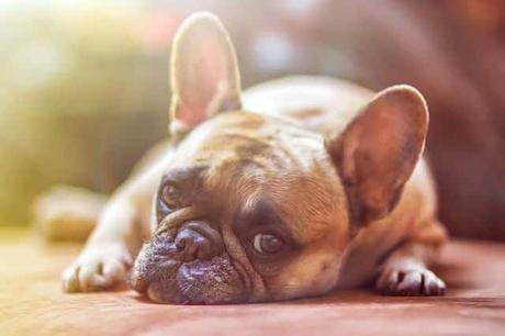 ¿Debería tener un perro? Una lista de pros y contras
