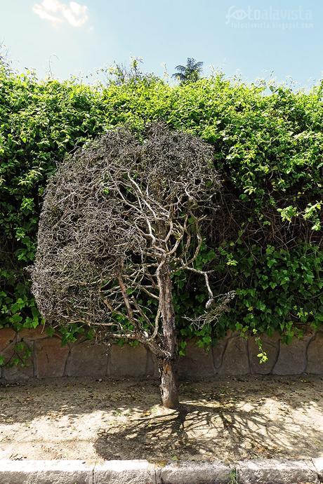 Árbol seco de raíces secas - Fotografía