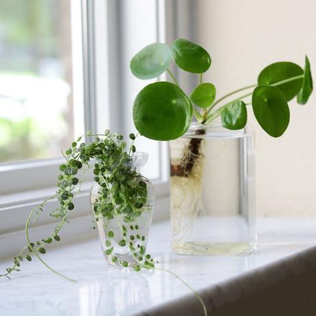 LA PLANTA EN TENDENCIA...