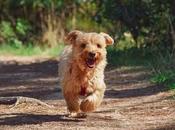 Cómo entrenar perro para escape