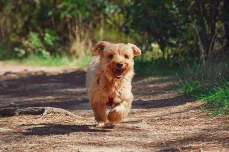 Cómo entrenar a tu perro para que no se escape