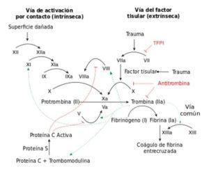Sangre y Hemoderivados: conceptos básicos.
