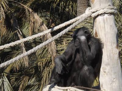 La crueldad neuronal en la cautividad de seres vivos