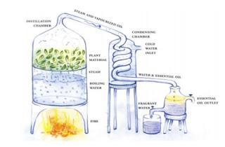 Los métodos de extracción de los aceites esenciales naturales