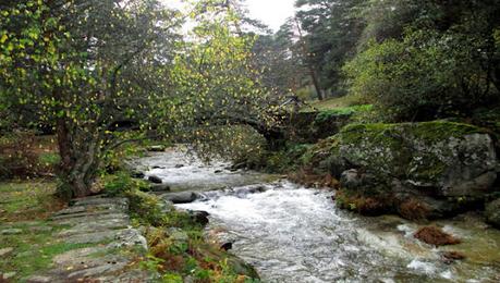 De Seguir Creando al bosque de Valsaín: Javier Reverte