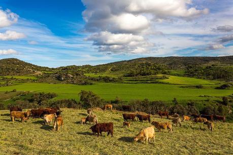 Compra de carne directa al ganadero