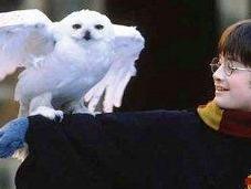 Harry: amigo quiere bien
