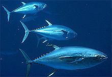 Información sobre el pescado