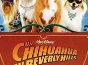 chihuahua Beverly Hills