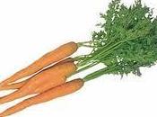 zanahoria como planta medicinal