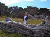 """windy beach"""" (dias ventosos playa)"""