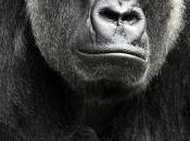 Psicocuriosidad: lentes anti-gorilas