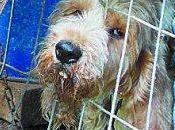 Rescatados once perros caza pésimas condiciones navarra