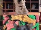 Hasta perros disfrutan tecnología