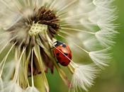 ¡Atención! tienes estos insectos jardín, traerán muchos beneficios!