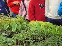 Alumnos con los semilleros