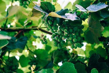 Soñar con uvas verdes