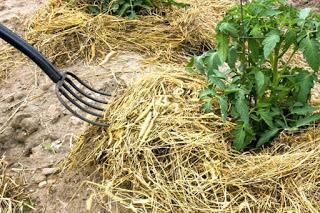 Cuidar el jardín en invierno: Mulching o acolchado