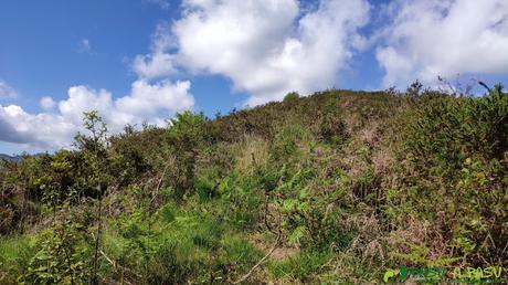 Vegetación en las proximidades de la cima del Pico Llovio o Lloe