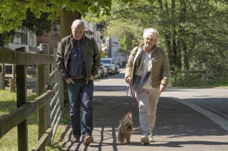 23 paseos, los perros y el amor