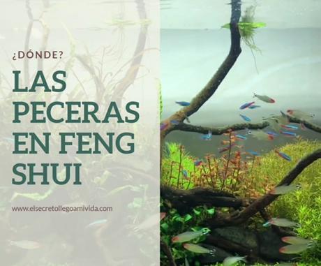 Pecera y Feng Shui