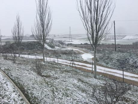 nevada enero 2021