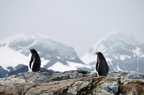 Cabo de Hornos y el albatros errante (relato)