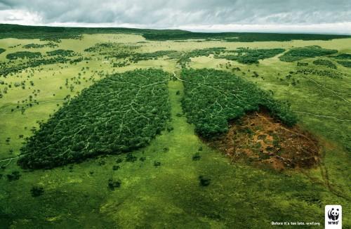 amazonas-pulmon-planeta