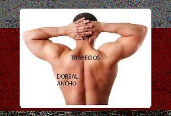 Si puede de hernia en vientre estar enfermo la espalda