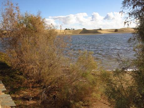 Dunas y Charca de Maspalomas: tesoros en peligro