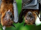 murciélagos vitales
