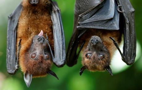 Los murciélagos son vitales