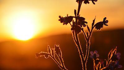 Sunrise and violets