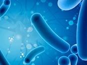 sabias probióticos