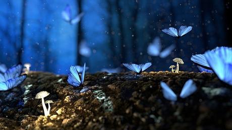 Mil mariposas