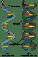 Un tratamiento inhalado con ARNm puede detener la gripe y el COVID -19