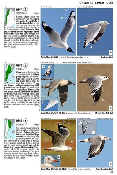 Guía Audiornis de las Aves de Argentina