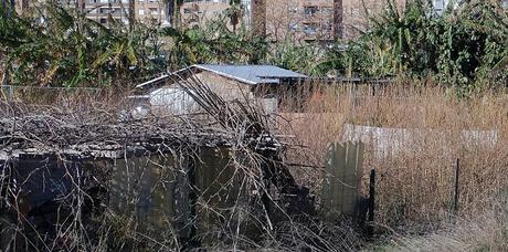 Imagen 16: En Benimaclet  sigue las mismas pautas que en otras ciudades y pueblos de la Comunidad Valenciana: Masías, casas y tierras  ocupadas, chabolas  construidas  en solares.