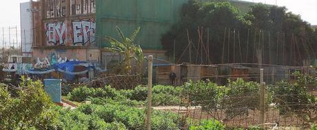 Imagen 5: En Benimaclet  sigue las mismas pautas que en otras ciudades y pueblos de la Comunidad Valenciana: Masías, casas y tierras  ocupadas, chabolas  construidas  en solares.