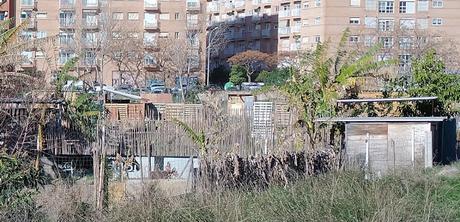 Imagen 4: En Benimaclet  sigue las mismas pautas que en otras ciudades y pueblos de la Comunidad Valenciana: Masías, casas y tierras  ocupadas, chabolas  construidas  en solares.