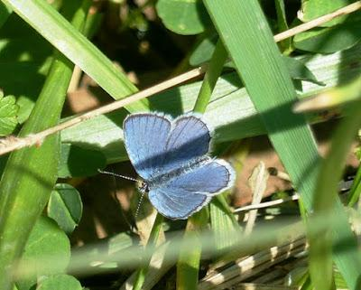 Algunas mariposas, primeros registros