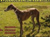 Luci perdido Aranjuez