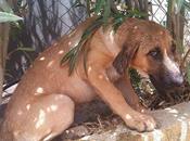 MARÍA, cachorrita cruce pastor alemán abandonada golpeada.
