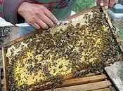 Balance poblacional colonia abejas
