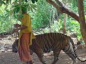 templo tigres, Tailandia