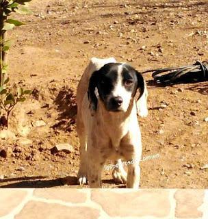 Ayuda a una perra abandonada