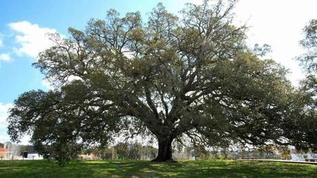 La metáfora del árbol