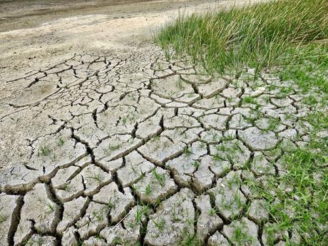 EL CAMBIO CLIMÁTICO Y LAS PLAGAS