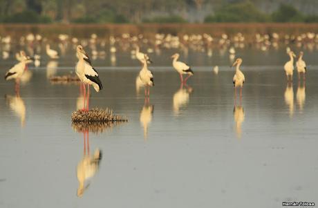 Multitud de cigüeñas